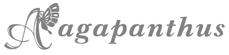 アガパンサス
